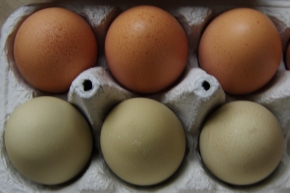 Egg Labeling, Nutrition, and Ethics