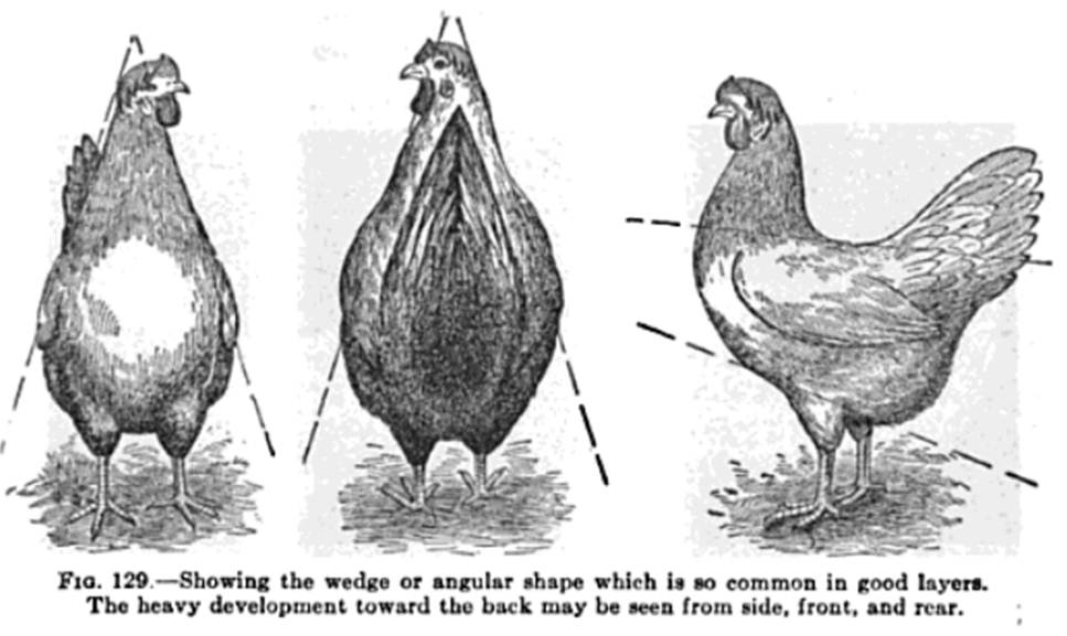 Euskal Oiloa Chicken Forum / Body type diagrams from old poultry books