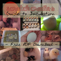 Scratch Cradle's Guide to Incubation