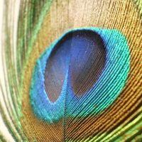 GMS7: Plumage Pigments