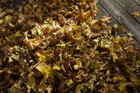 Using Fall Leaves