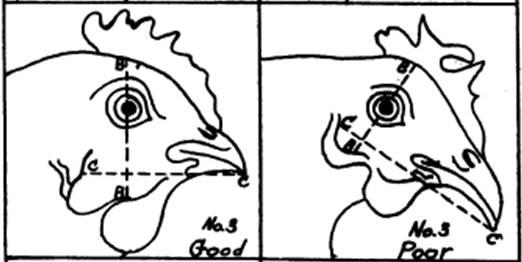 """Balanced"" vs. non-balanced head shape, From Steup's 1928 Head Points"