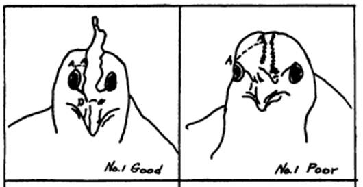 A flat-topped head vs. a round-topped head, From Steup's 1928 Head Points