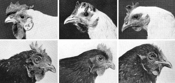 Compiled images from Head Points (1928) 1st column egg production, 274/281; 2nd: 187/188; 3rd: 94/106